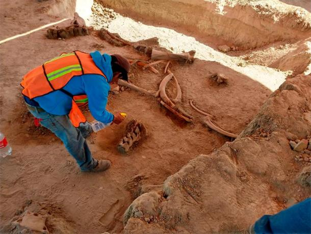 More than 60 mammoths and other fauna from the Pleistocene epoch were discovered at the Mexican site. (INAH)