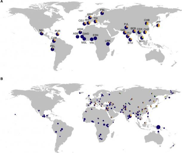The top map shows the frequencies of Neanderthal-like haplotypes.