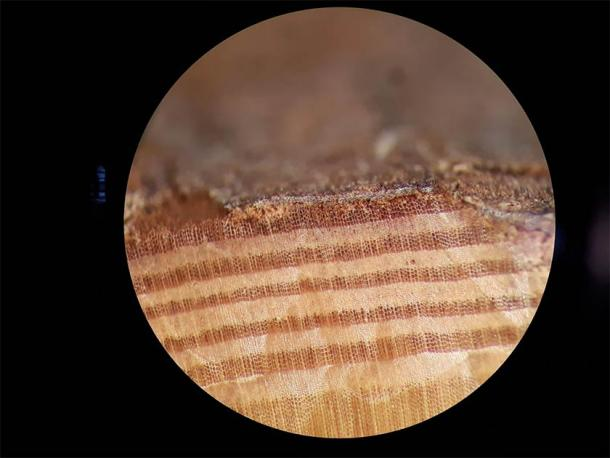 A microscope image of the outermost tree rings in a beam from Por-Bajin. For the last ring, the tree only formed early wood (darker bands; lighter bands are late wood). The carbon-14 spike was discovered in the 3rd ring from the bark. (Image: Petra Doeve / PNAS)