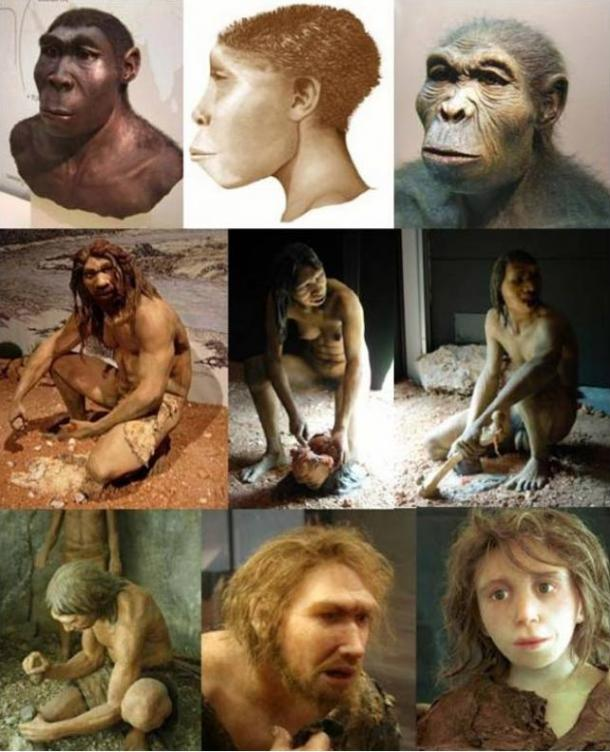 A mix of hominid (genus Homo) depictions; (from right to left) H. habilis, H. ergaster, H. erectus; H. antecessor - male, female, H. heidelbergensis; H. neanderthalensis - girl, male, H. sapiens sapiens