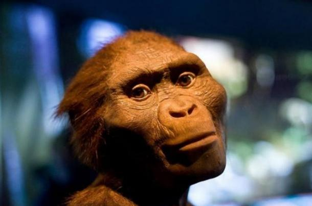 "'The Hidden Treasures of Ethiopa' exhibit at Houston Museum of Natural Science featuring a model of ""Lucy"", Australopithecus Afarensis."