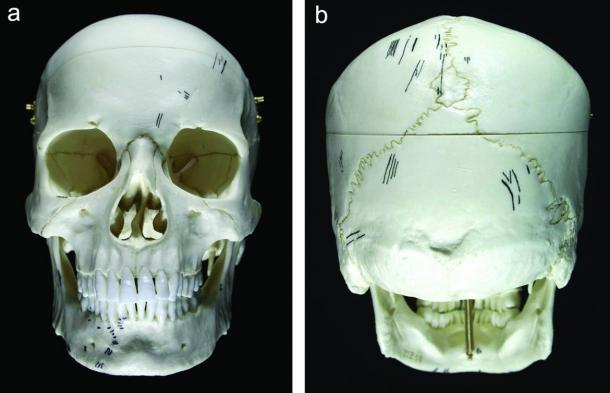 A model of a skull from Scaloria Cave showing the distribution of cut marks, in black