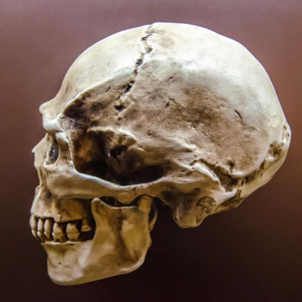 A modern human skull.