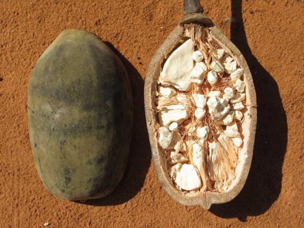 Baobab Fruit or 'monkey bread'.