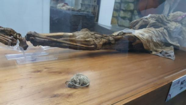 The mouse found with the mummy of Guano.