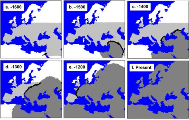 mtDNA-based simulation of modern human expansion in Europe starting 1600 generations ago. Neanderthal range in light grey