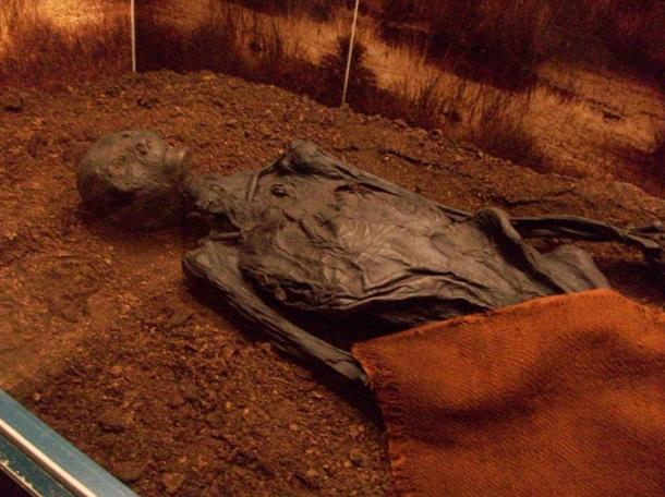 The naturally mummified bog body of the Man of Rendswühren from Germany, dated to the Roman Iron Age of the 1st or 2nd century AD