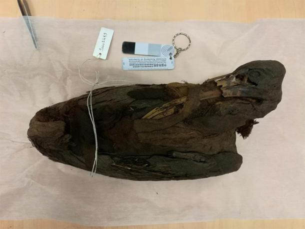 The image shows a mummified sacred bird, an ibis, from the Egyptology collections at the Musée des Confluences in Lyon. (Romain Amiot / LGL-TPE / CNRS)