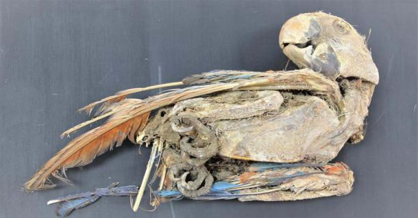 A mummified scarlet macaw parrot recovered from Pica 8 in northern Chile. (Calogero Santoro & José Capriles / Universidad de Tarapacá & Penn State)