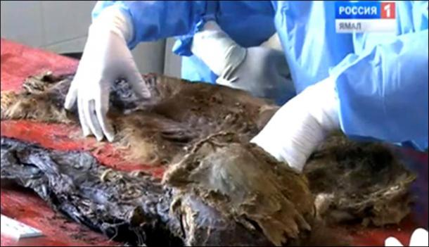 The main thing is that this mummy was preserved naturally and the internal organs were not removed, unlike with artificial mummies.'