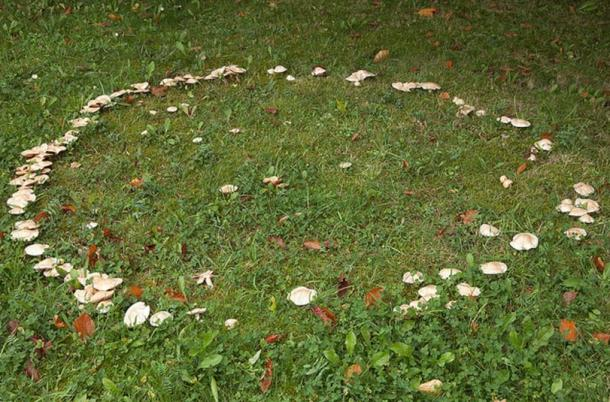 A mushroom ring creating a circle on the grass. These rings were believed to be portals to the fairy realm, and areas of danger.