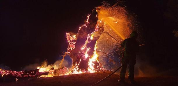 The mysterious fire that consumed England's world-famous Whiteleaved Oak (Ledbury Fire Station / Hereford Times)