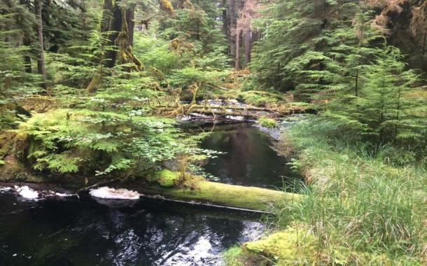 The natural beauty of Haida Gwaii (Rondeau, C / CC BY 2.0)