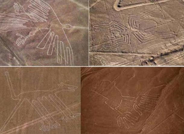 A collection of Nazca geoglyphs including the humming bird (top left) and monkey (bottom left).