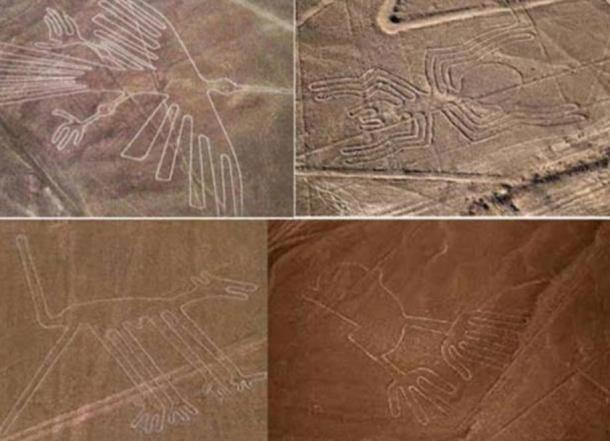 A collection of Nazca geoglyphs including the humming bird (top left) and monkey (bottom left)