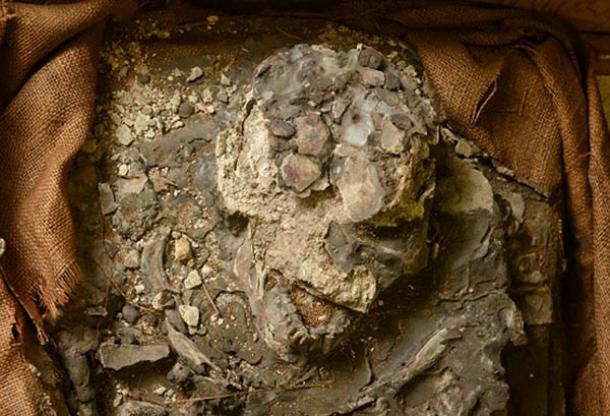6,500-year-old skeleton - Noah