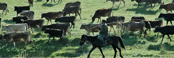 A nomadic pastoralist moves cattle across the foothills of Kazakhstan.