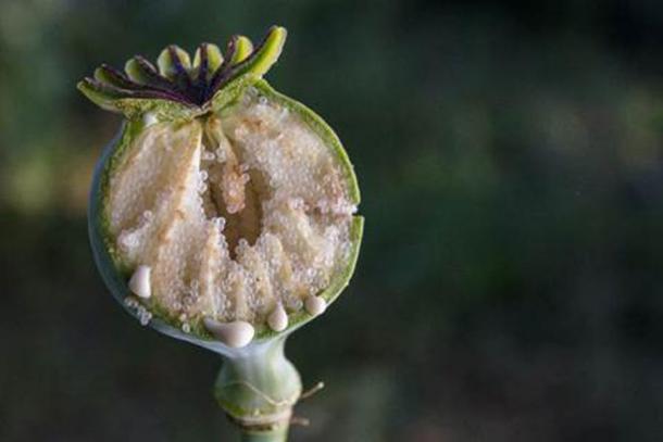 De geneeskrachtige eigenschappen van opium zijn al duizenden jaren bekend (Xiao / Adobe Stock)