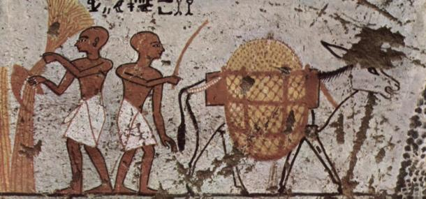 Sickles are old, known even in the 13th century BC, as in this painting from Thebes in ancient Eygpt.