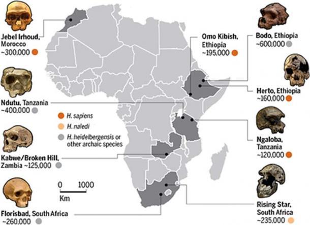 'The pan-African dawn of Homo sapiens'