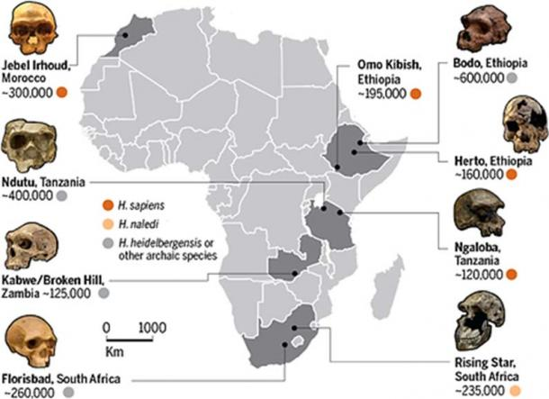'The pan-African dawn of Homo sapiens'