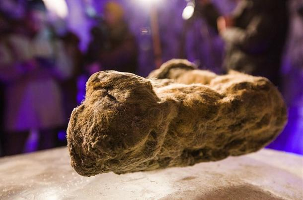 The permafrost preserved them in wondrous lifelike detail for at least 10,000 years.