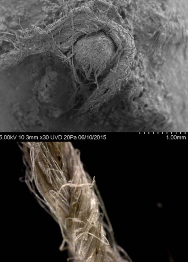 Top: SEM photo of Neanderthal cord from Abri du Maras. (Credit: M-H. Moncel) Bottom: Close-up of modern flax cordage showing twisted fibre construction.