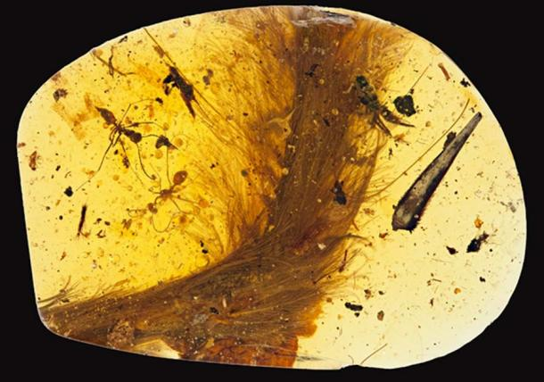 A 99 million-year-old piece of amber with a feathered dinosaur tail trapped inside.
