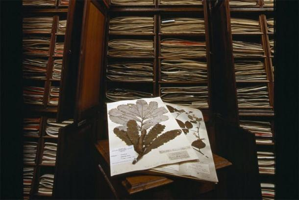The plant specimens Joseph Banks collected were taken back to England, where they remain today in the Natural History Museum. Natural History Museum