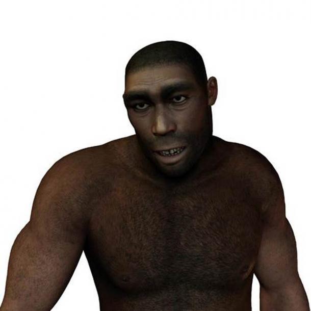 Un autre candidat possible pour fabriquer ces outils en os est l'Homo erectus.  (York/Adobe Stock)