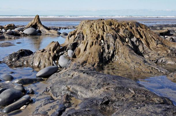 The prehistoric fossilized trees off Cardigan Bay are sometimes revealed by low tides. Is this the legendary land of Cantre'r Gwaelod?