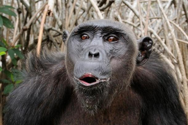 Many primates vocalize; only people have full-blown language.