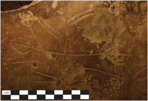 A quadruped with paddle shaped icons engraved across the torso. (S. Murray)