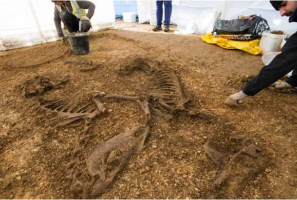 The recent excavations unearthed a chariot and two horses.