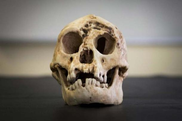 A reconstructed skull of Homo floresiensis.