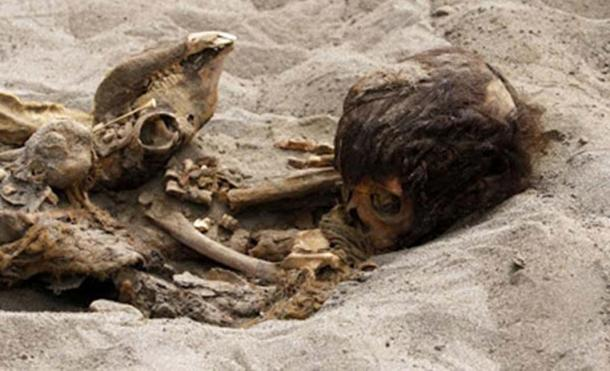 The remains of a child and a llama unearthed in the fishing town of Huanchaquito, Trujillo, Peru.