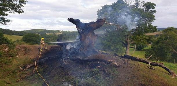 What remains of England's sacred historic oak or the Whiteleaved Oak after the tragic fire.   (Ledbury Fire Station / Hereford Times)