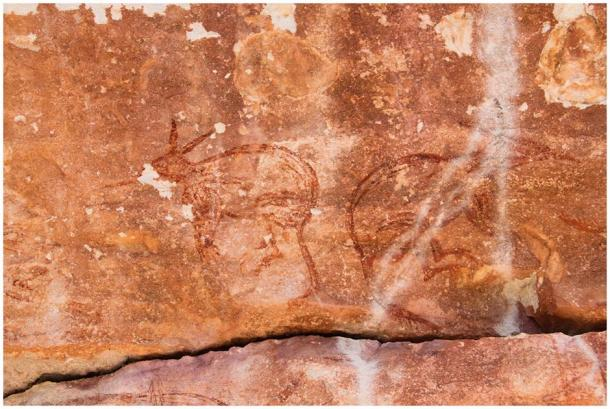 The research team discovered what appears to be a pair of Maliwawa rock art depictions of two back-to-back bilbies at the Awunbarna site. (P. Taçon / Australian Archaeology)