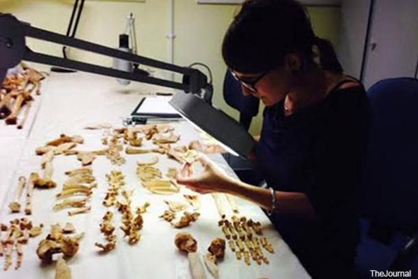 A researcher examines the 3,200-year-old, cancer-riddled bones of an ancient Sudanese man.