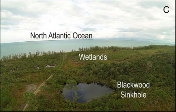 The researchers reached their conclusions from evidence gathered at the Blackwood Sinkhole, on the Abaco Islands in the Bahamas. (Fall, P. et. al. / PNAS)