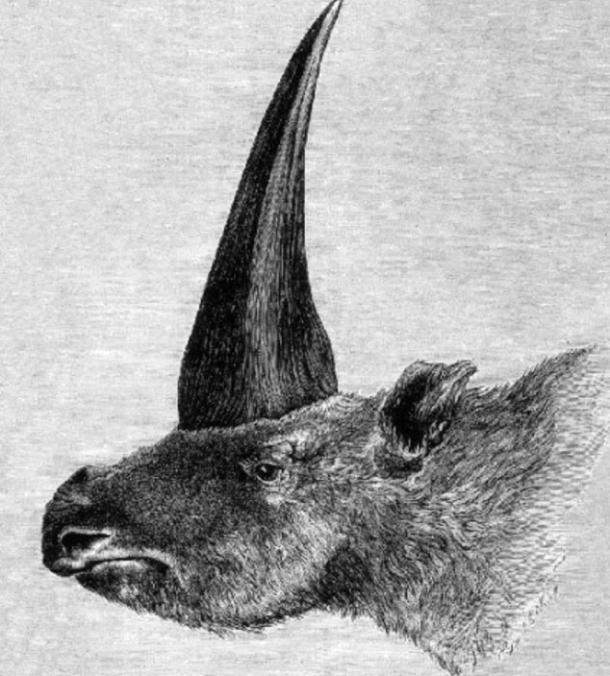 First published restoration of Elasmotherium sibiricum, by Rashevsky under supervision of A.F. Brant.