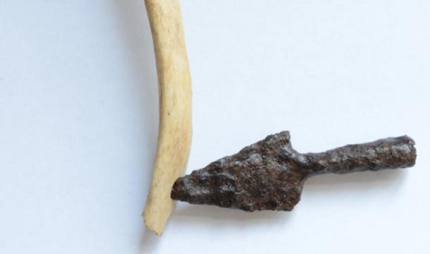 Skeleton 2: rib with the arrowhead that produced the injury.