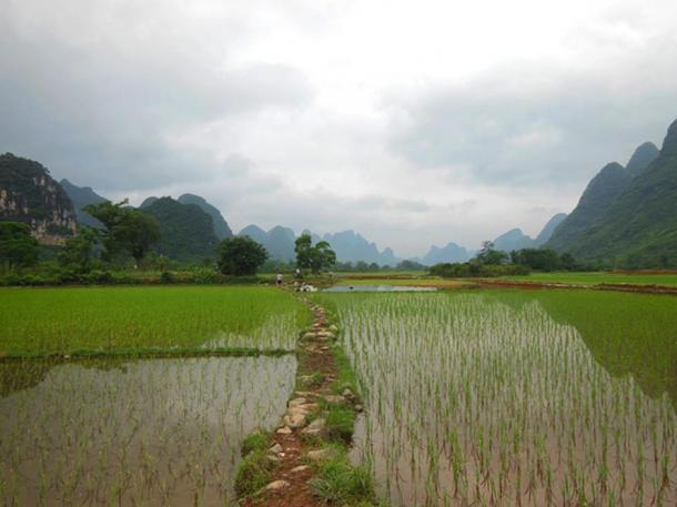 A modern rice field in China