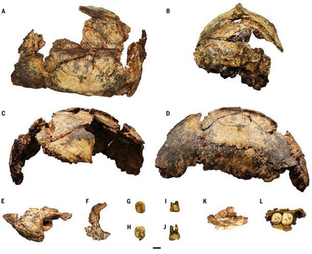 P. robustus skullcap: the species was a primitive relative of human species. (Herries / Science)