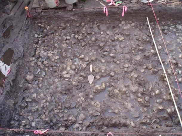 This rock pavement discovered at the site would have made harvesting the wapato tubers much easier