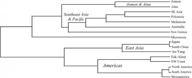 The study of teeth samples found little relationship between the Jomon people of Japan and Native Americans. (Scott et. al. / Paleoamerica)