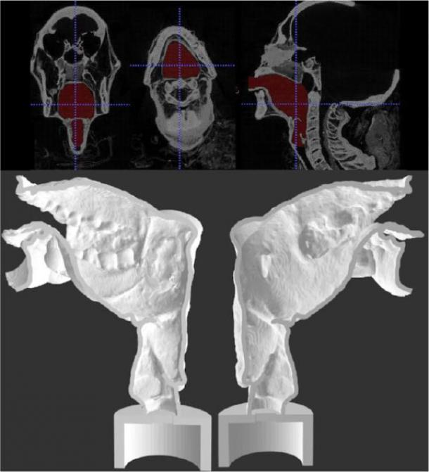 Final segmentation view (upper) and sagittal section of the two halves of 3-D printed Nesyamun's vocal tract (lower). The lack of tongue muscular bulk and soft palate is clear. (Scientific Reports)