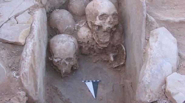 A set of skulls found buried in a stone cist inside a prehistoric house at Shkārat Msaied in Jordan. Image: Moritz Kinsel, Shkārat Msaied Neolithic Project, University of Copenhagen.