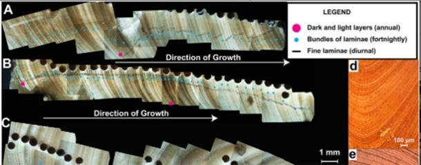 Counting shell laminae on rudist clams allowed the calculations to be made. (Niels J. de Winter et al. AGU)