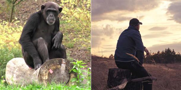 Chimpanzee sitting, (Left) (CC BY-SA 3.0), Human sitting, (Right) (CC0)